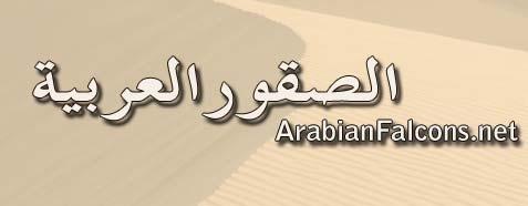 ARABIAN FALCONS الصقور العربية